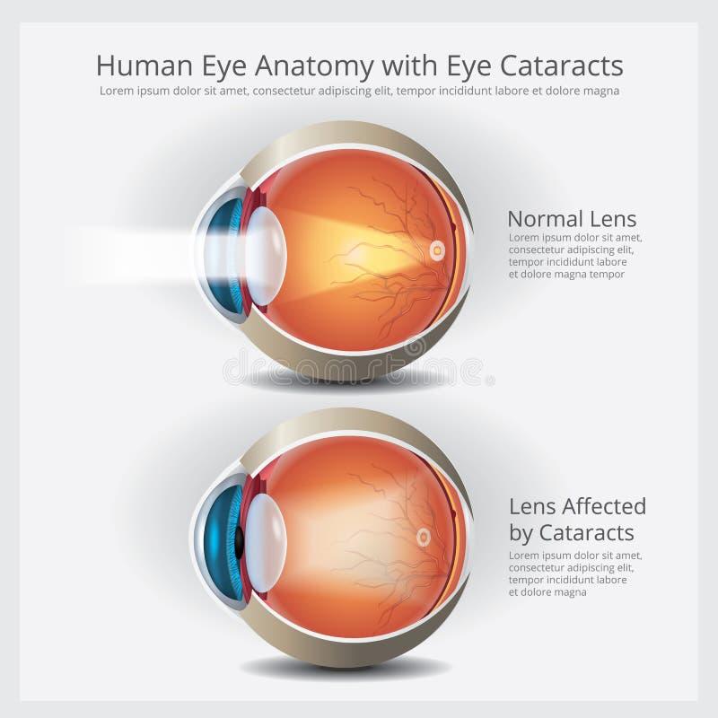 Anatomi och det normala Lens för mänskligt öga vektor illustrationer