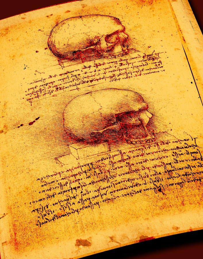 Anatomia fotografia royalty free