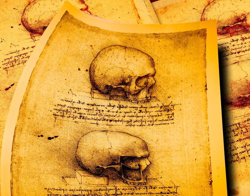 Anatomia royalty ilustracja