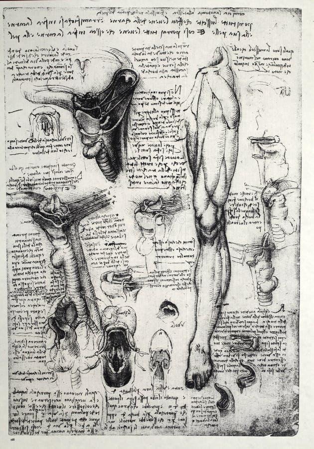 Anatomia ilustração stock