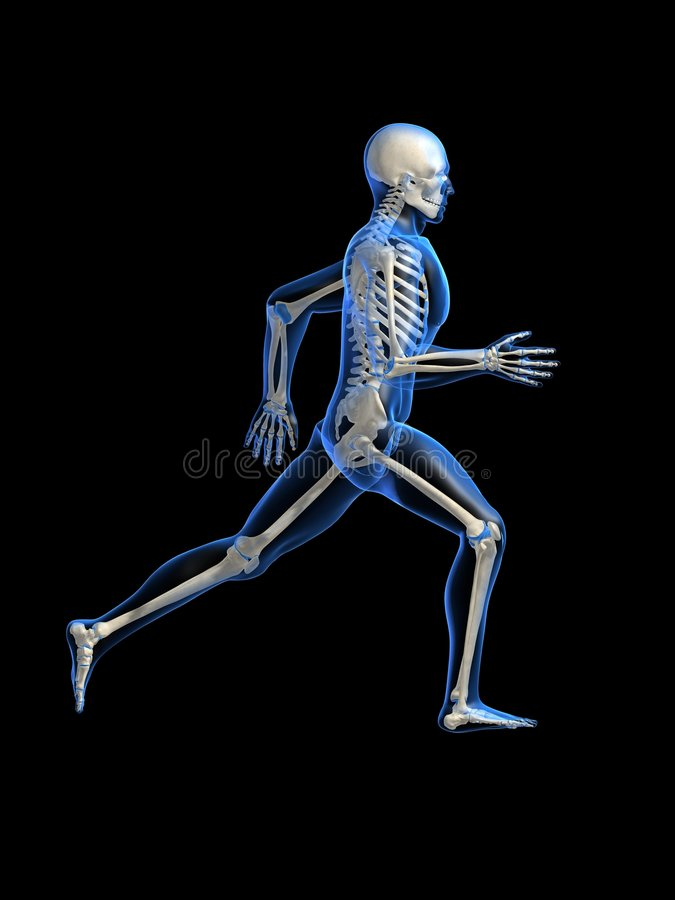 anatomia biegł ilustracji