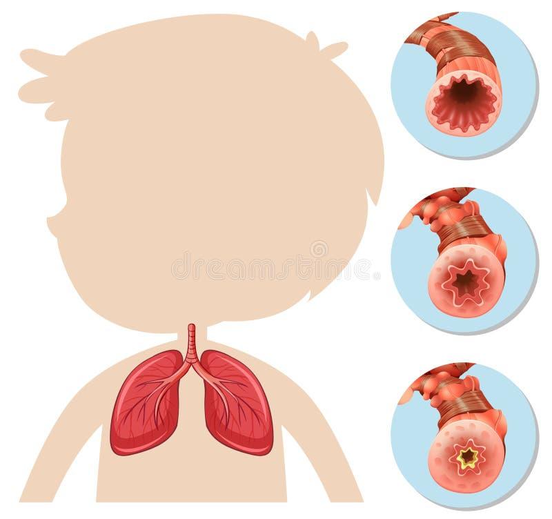 Anatomia chłopiec sylwetki płuco ilustracja wektor