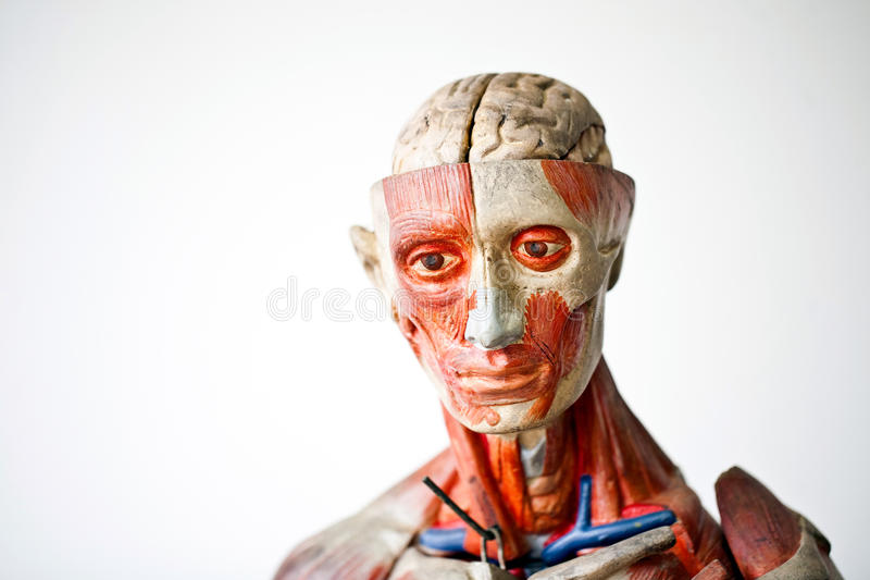 Anatomia dell'essere umano di Grunge fotografia stock libera da diritti