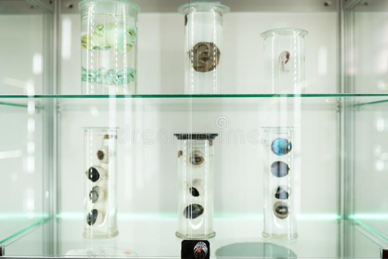 Anatomia dell'organo umano parte degli occhi del corpo umano in formalina Tecnologia di scienza medica fotografia stock