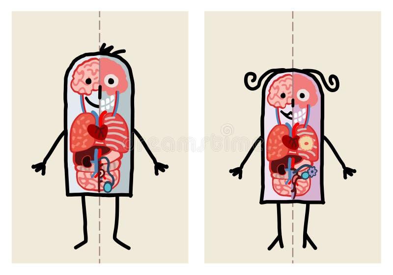 Anatomia della donna & dell'uomo royalty illustrazione gratis