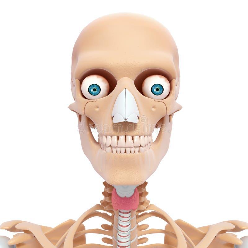 Anatomia dello scheletro della testa umana illustrazione vettoriale