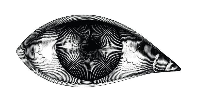 Anatomia di clipart d'annata di tiraggio della mano dell'occhio umano isolato su fondo bianco royalty illustrazione gratis