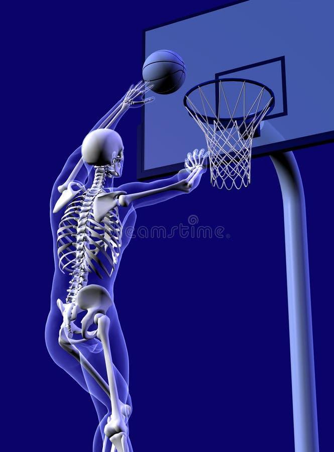 Anatomia do basquetebol - colheita próxima ilustração stock