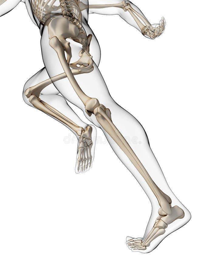 Anatomia do corredor ilustração stock