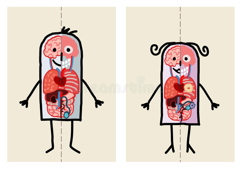 Anatomia do homem & da mulher ilustração royalty free