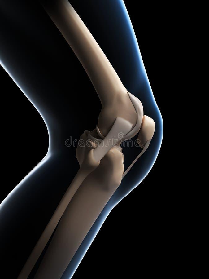 Anatomia do joelho ilustração stock