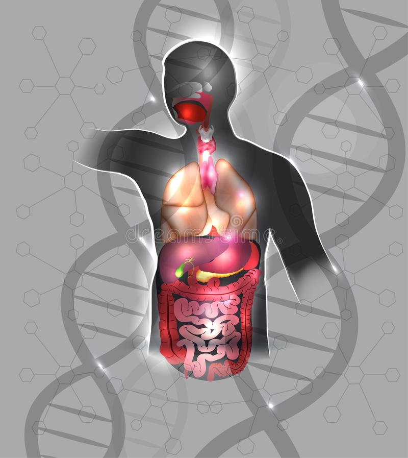 Anatomia e DNA illustrazione di stock