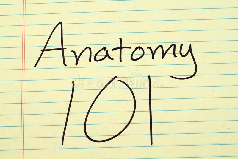 Anatomia 101 em uma almofada legal amarela fotografia de stock