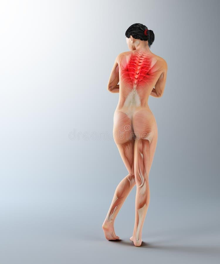 Anatomia fêmea - dor traseira superior imagem de stock royalty free