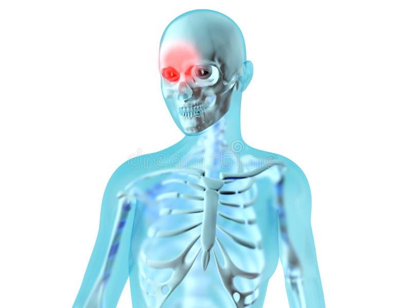 Anatomia femminile - emicrania royalty illustrazione gratis