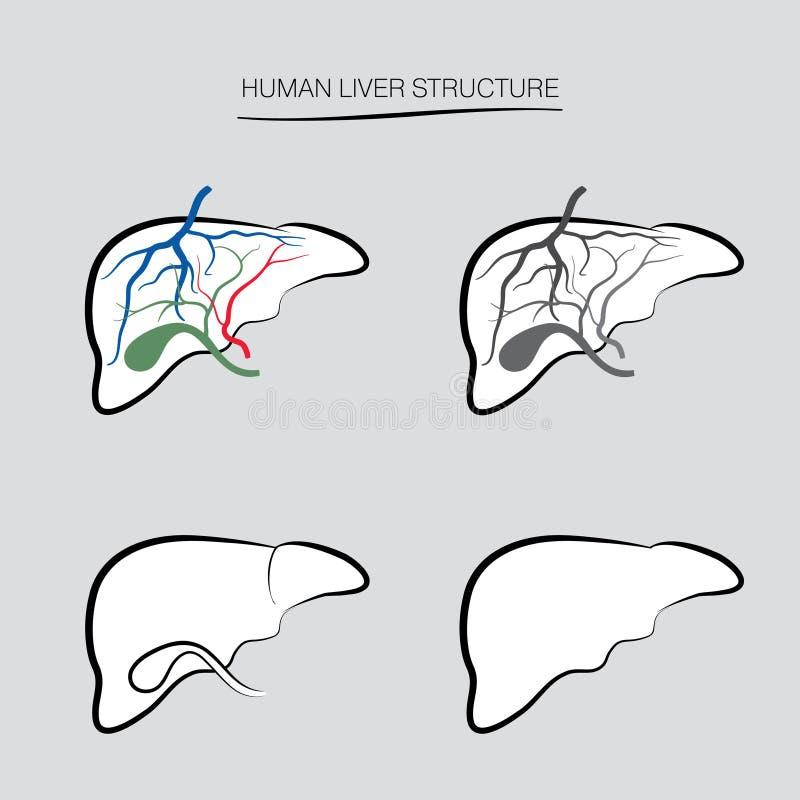 Anatomia humana do fígado Ícones humanos do órgão interno ilustração stock