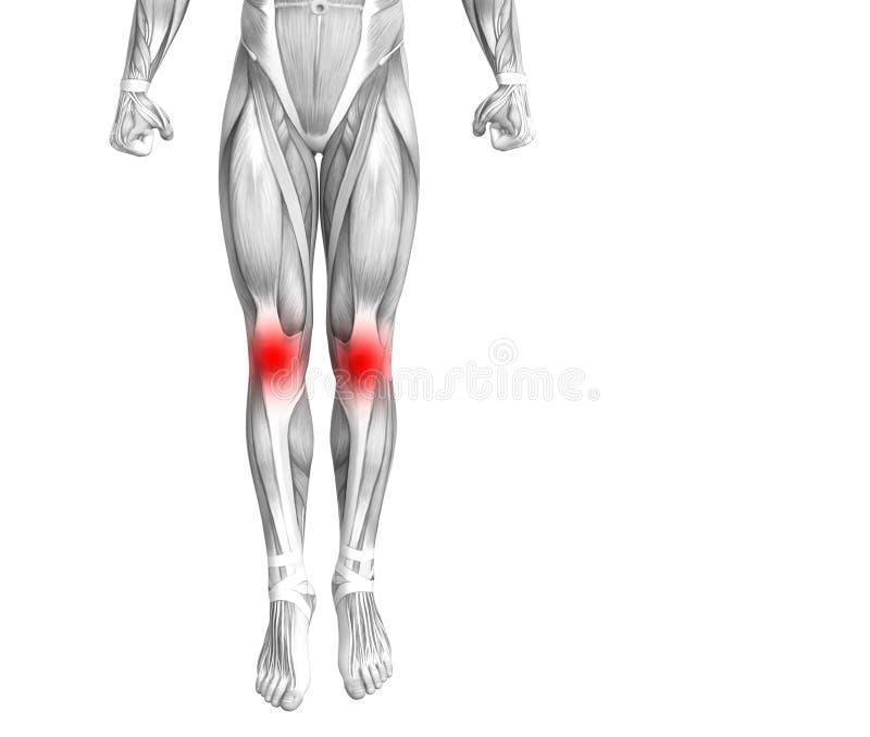 Anatomia humana do joelho com inflamação encarnado do ponto ilustração royalty free