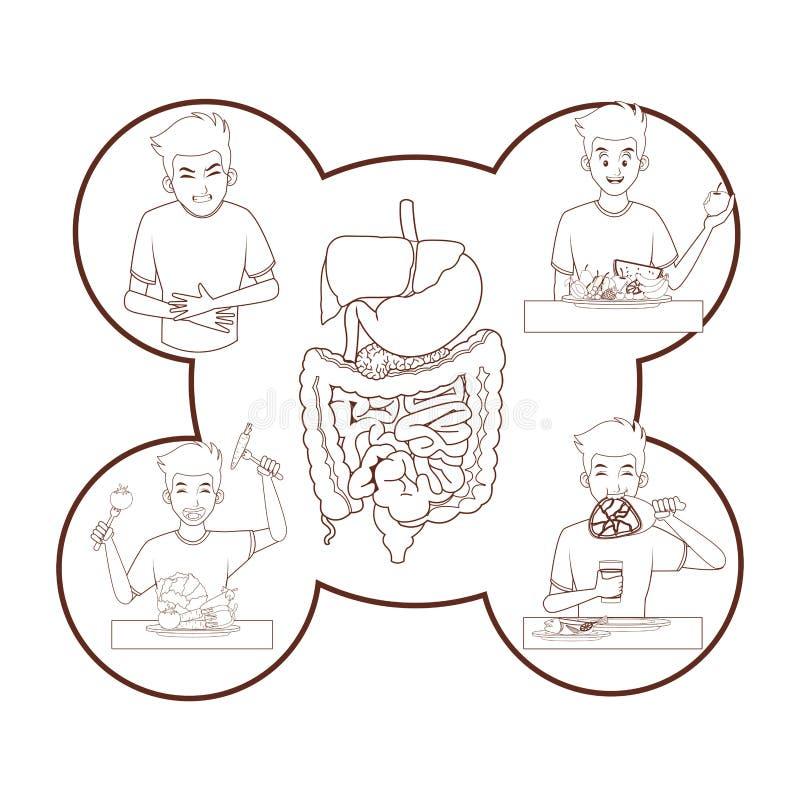 Anatomia humana nova ilustração do vetor