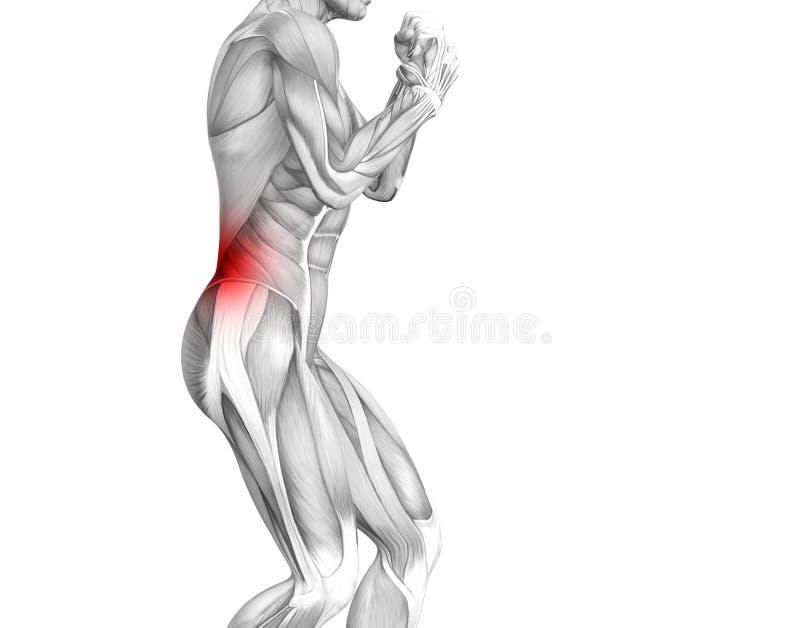 Anatomia humana traseira com inflama??o encarnado do ponto ilustração do vetor
