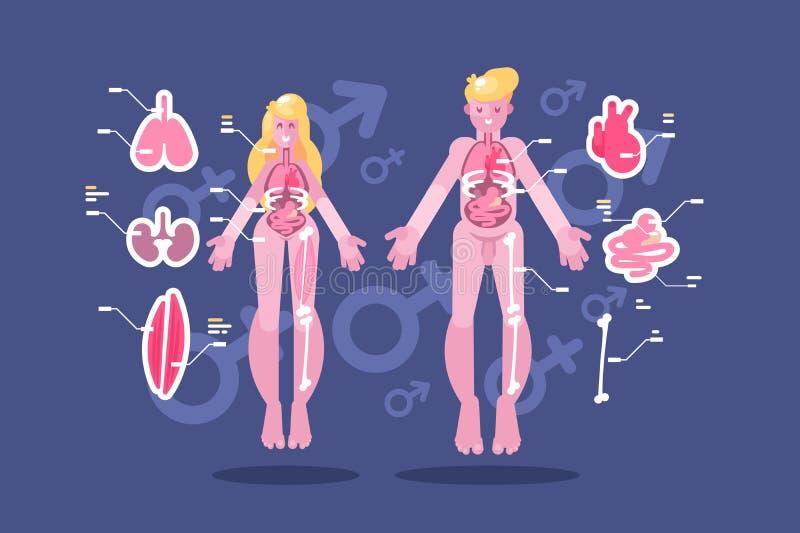 Anatomia infographic ciała ludzkiego mieszkanie ilustracja wektor