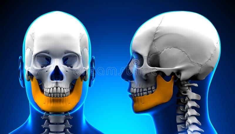 Anatomia maschio del cranio dell'osso della mandibola - concetto blu illustrazione di stock