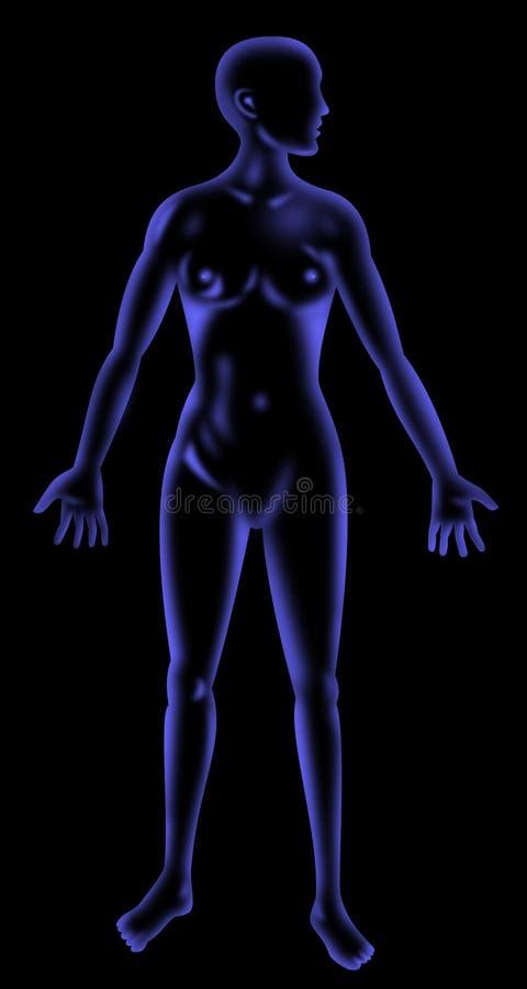 anatomia promień żeński ludzki x ilustracji