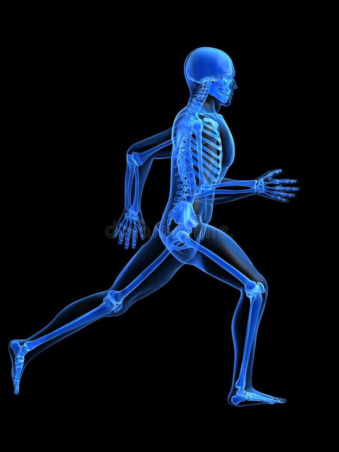 Anatomia Running do homem ilustração do vetor