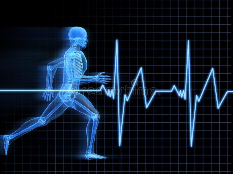 Anatomia Running do homem ilustração royalty free