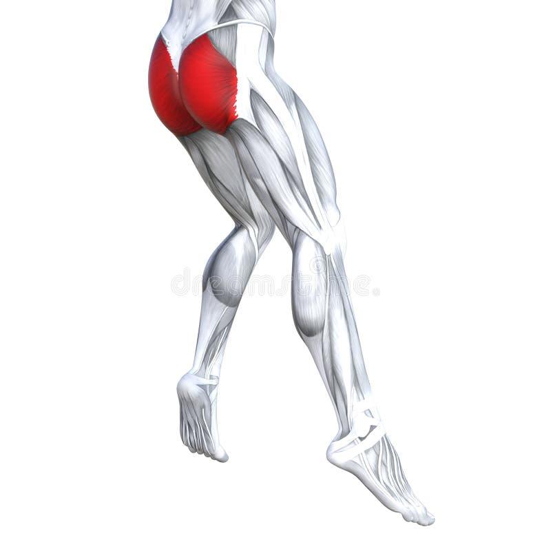 Anatomia superior traseira do ser humano do pé ilustração do vetor