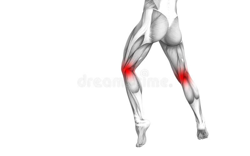Anatomia umana del ginocchio con infiammazione rovente del punto illustrazione di stock