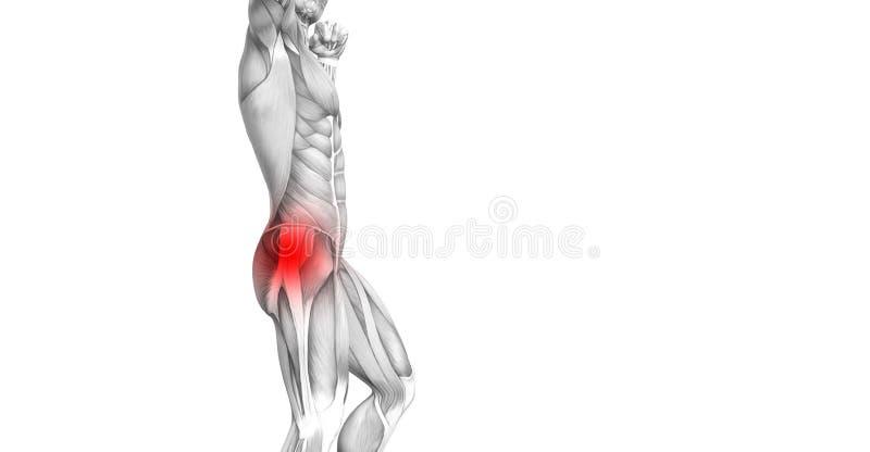 Anatomia umana dell'anca con infiammazione rovente del punto illustrazione vettoriale