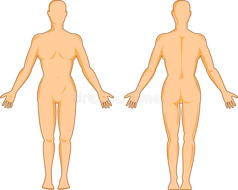 Anatomia umana femminile royalty illustrazione gratis