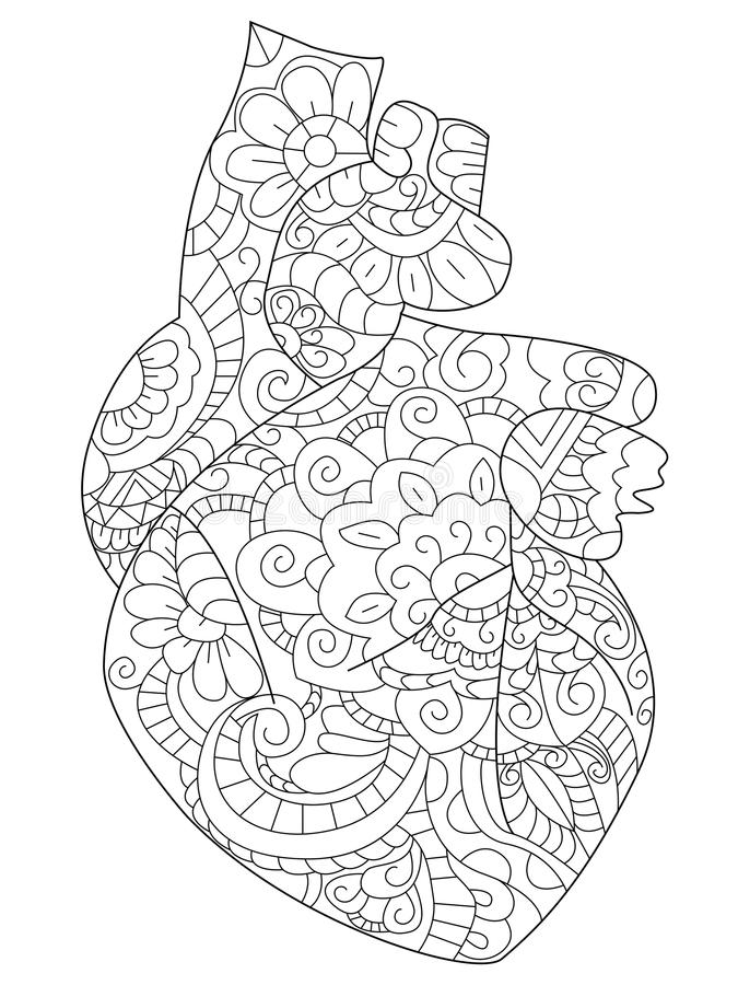 Download Anatomical Heart Coloring Book Vector For Adults Stock