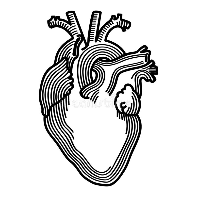 Anatomical heart Hand drawn Crafteroks svg free, free svg file, eps, dxf, vector, logo, silhouette, icon, instant download, digita. Anatomical heart vector eps stock illustration