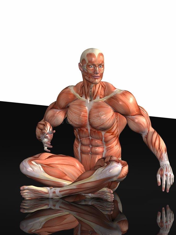 Anatomical Man Royalty Free Stock Images