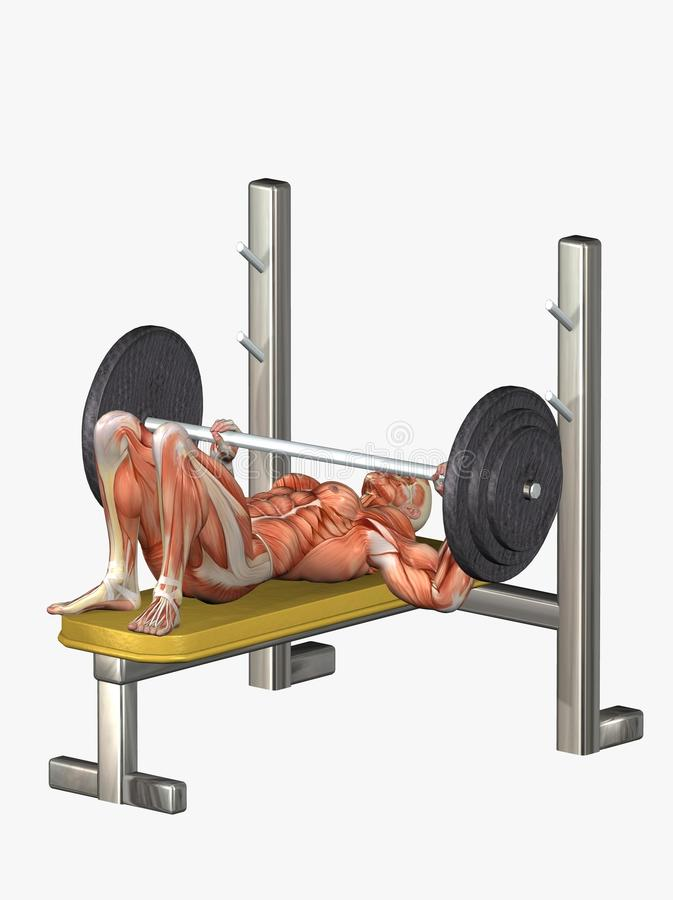 Download Anatomical Man Lifting Weights Stock Illustration - Image: 13183535