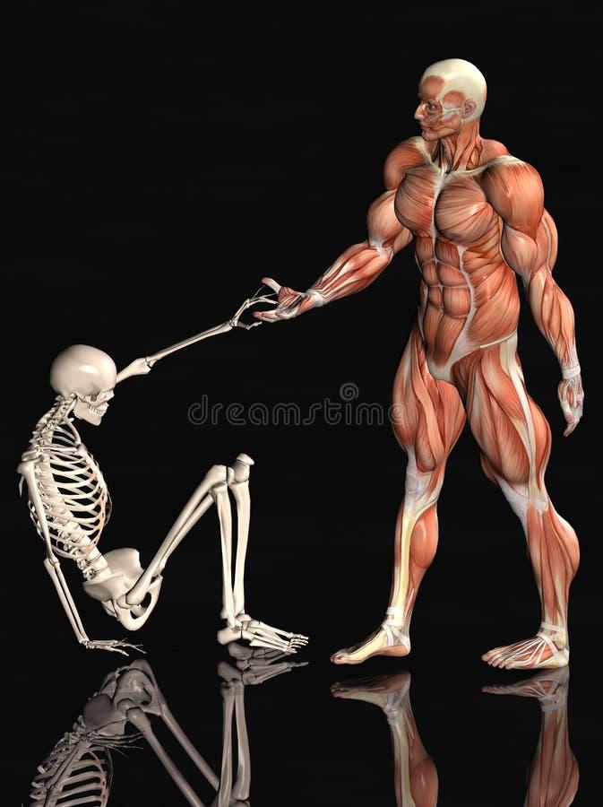 Anatomical Man And Skeleton Royalty Free Stock Images