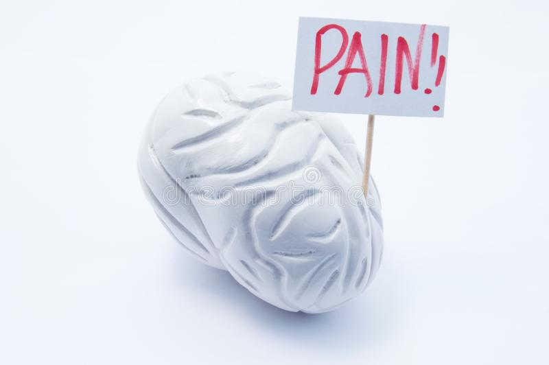 Anatomiczny model mózg z plakatem z inskrypcja bólem jest na białym tle Pojęcie fotografia migrena bólu objawy i s obraz royalty free
