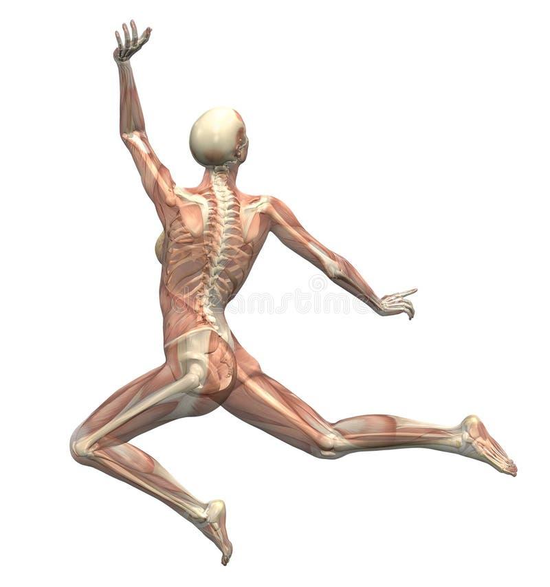 Anatomie in Bewegung 1 stock abbildung. Illustration von menschlich ...