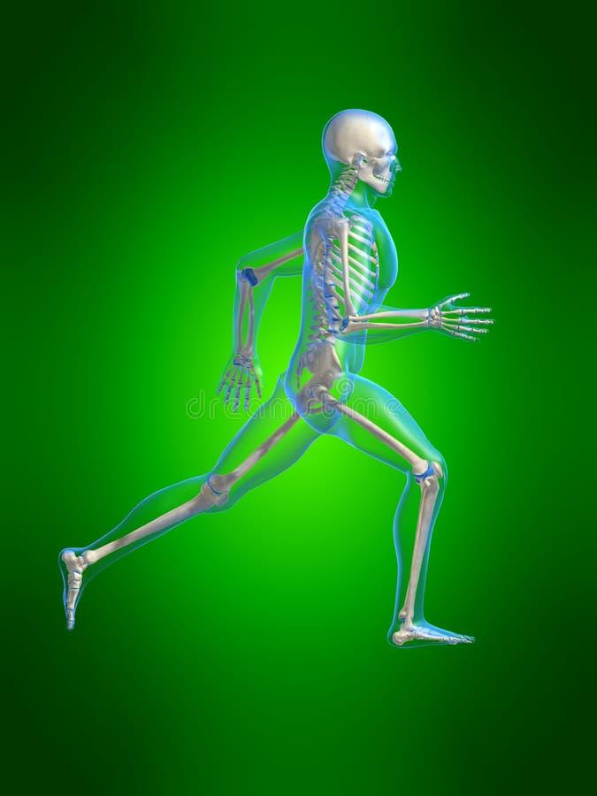 Anatomie courante d'homme illustration libre de droits