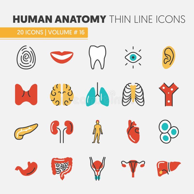 Fantastisch Anatomie Und Physiologie Körperteile Quiz Fotos ...