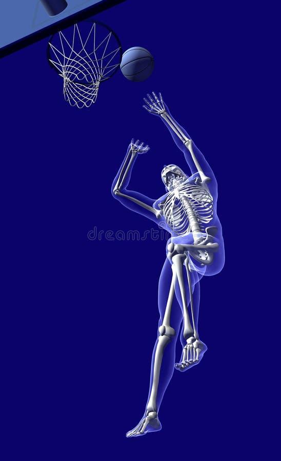 Anatomie de basket-ball - de dessous illustration de vecteur