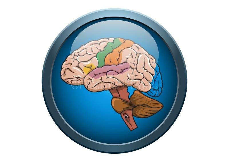 Anatomie de bouton médical d'illustration de cerveau humain illustration libre de droits