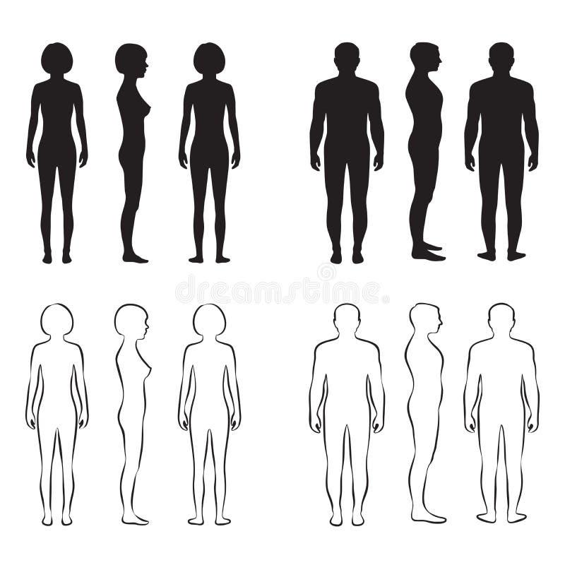 Anatomie de corps humain, illustration de vecteur