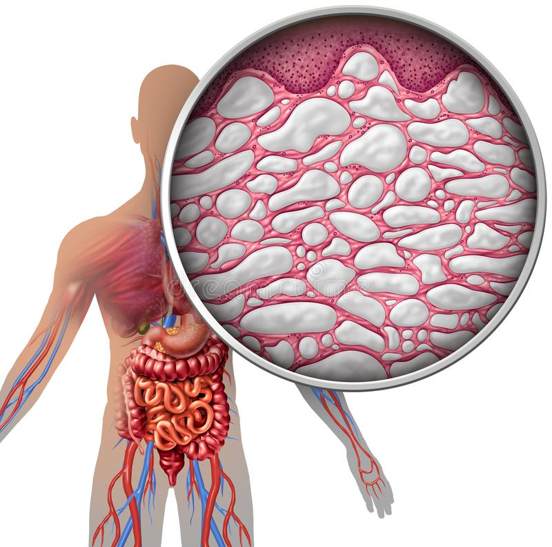 Anatomie de corps humain d'interstice illustration stock