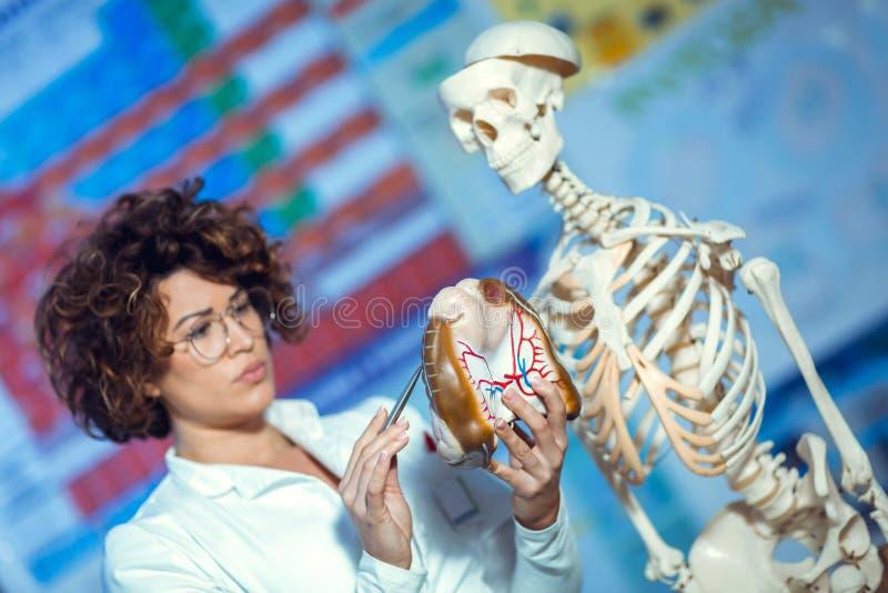 Anatomie de enseignement de femme de docteur utilisant le modèle d'esprit humain photos libres de droits