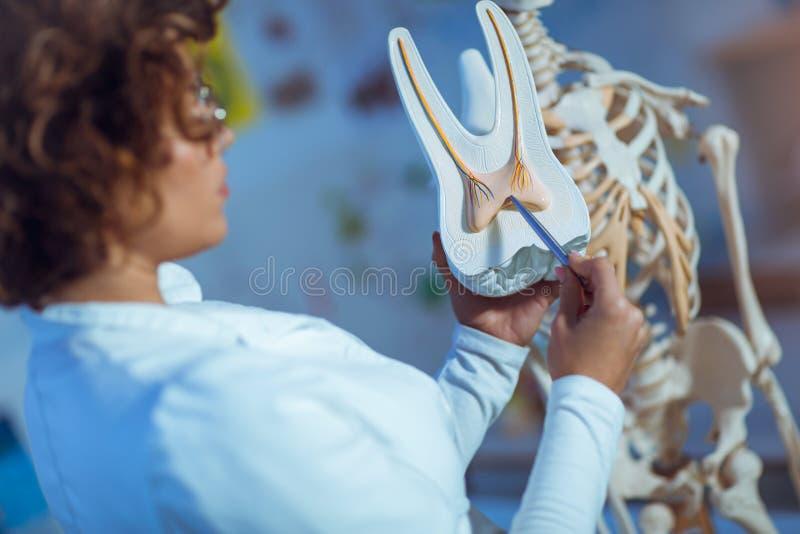 Anatomie de enseignement de femme de docteur utilisant le modèle de dent image libre de droits
