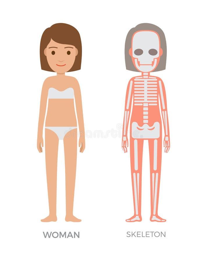 Anatomie de femme et bannière colorée de Struct de squelette illustration libre de droits