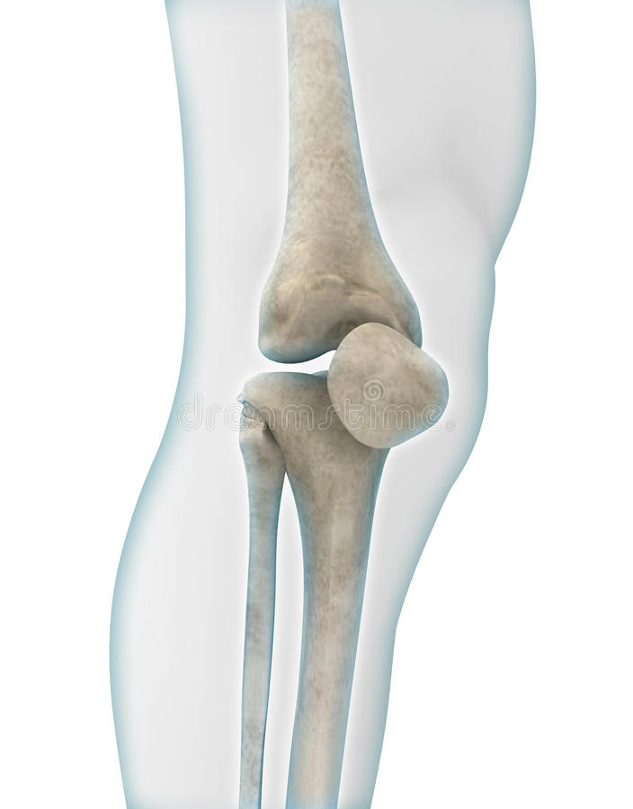 Anatomie de genou illustration libre de droits