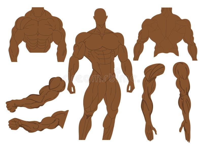 Anatomie de muscles d'un corps humain Anatomie musculaire masculine Illustration de vecteur illustration libre de droits